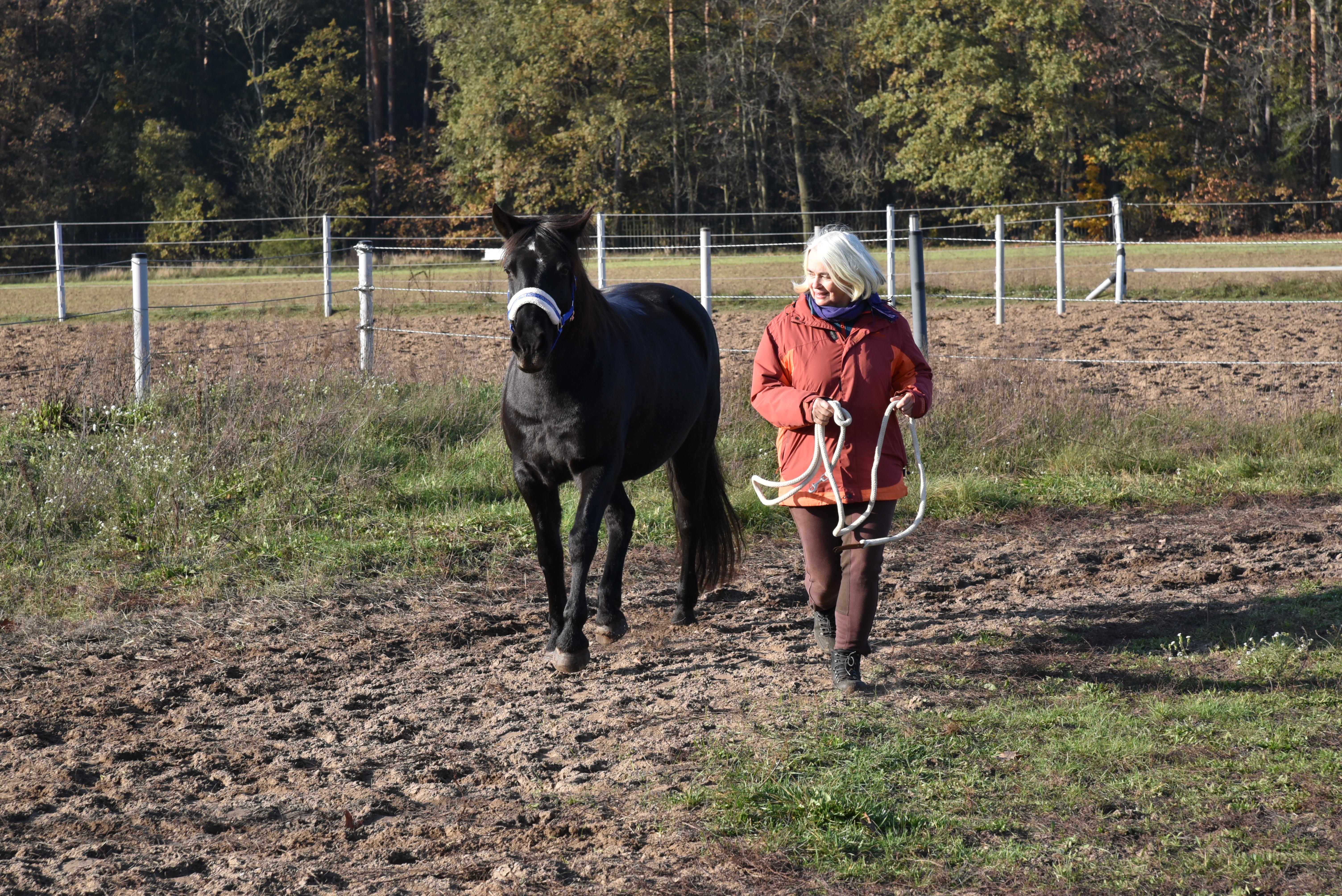 Pferdegestütztes Businesscoaching